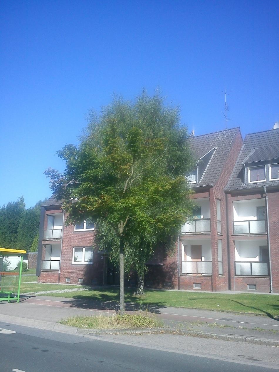 AufdemWEGzumDonner-s-TAG(s)MARKT43