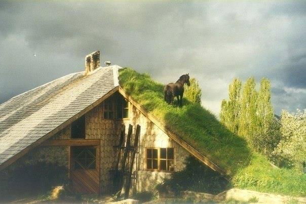 BLÄTTERwald3