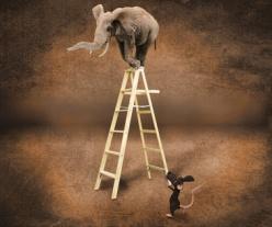 Elefante en una escalera y un ratón