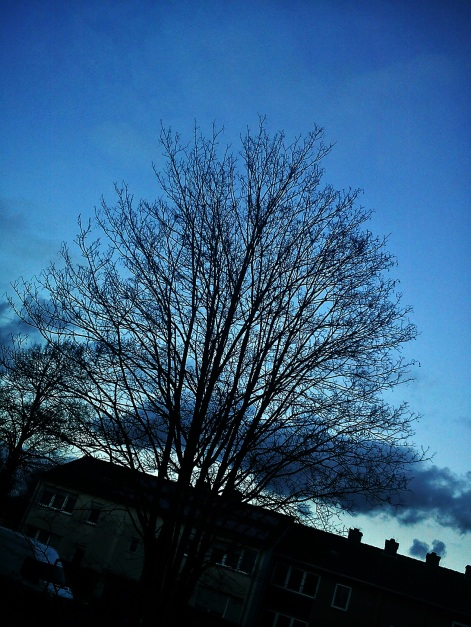 Baum--HORCHwasDAkommenMAG--GEFLÜSTER2