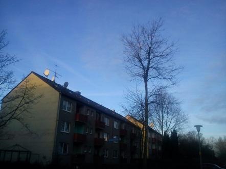 WEISHEIT(s)BÄUME--NEUjahr(s)GRÜßE4