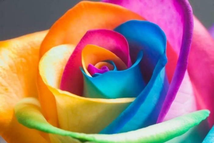 Eine BUNTE ROSE geht auf eine lange REISE und verströmt mit ihren schönen DUFT......die Bedingung(s)LOSE LIEBE.....und den ALL--FRIEDEN auf ERDE(n)wird mit dem schönen DUFT verbreitet